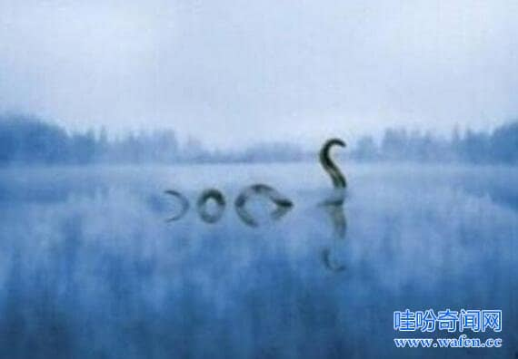 加拿大水怪奥古布古