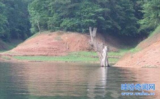 福建大金湖水怪之谜