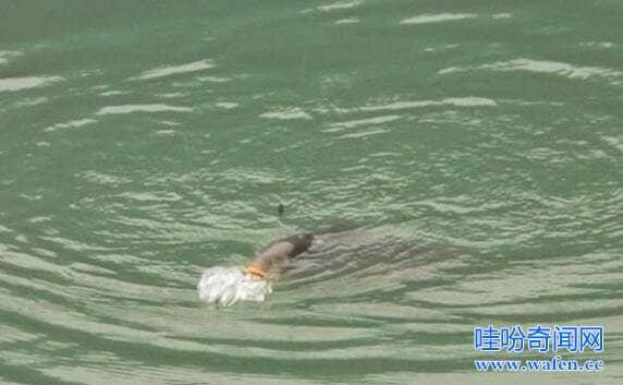 贵州六盘水水怪