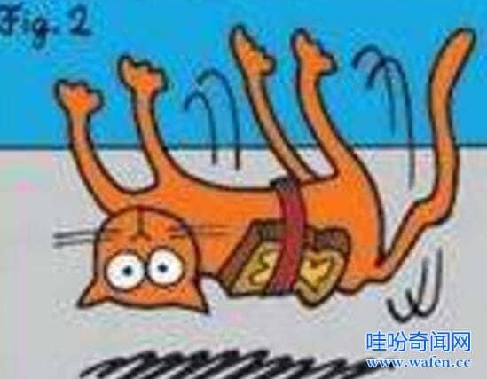 黄油猫悖论