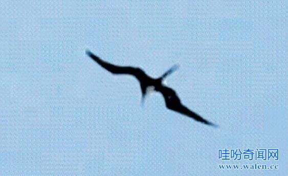 海岛上的魔鬼飞微微一愣翔者