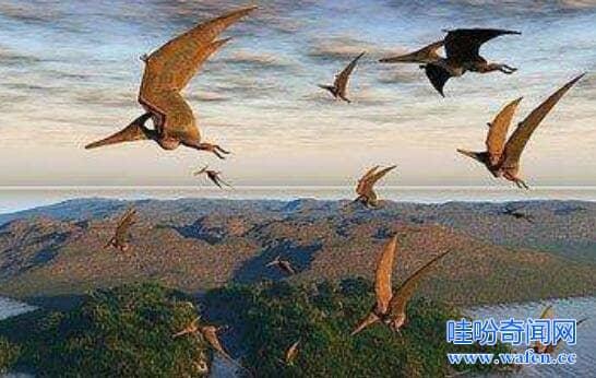 海岛上的魔鬼飞翔者