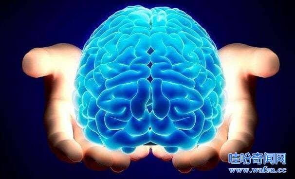 人类的大脑其实很可怕