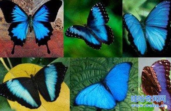 世界上最恐怖的蝴蝶