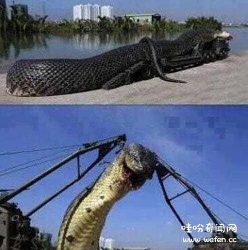 世界上最大的蛇10000米图片