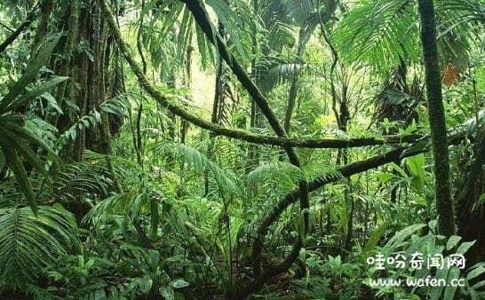 地球之肺是哪片热带雨林,亚马逊雨林是地球之肺/维持大气平衡
