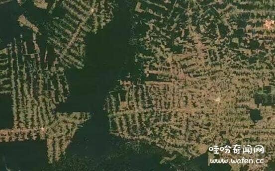 亚马逊森林