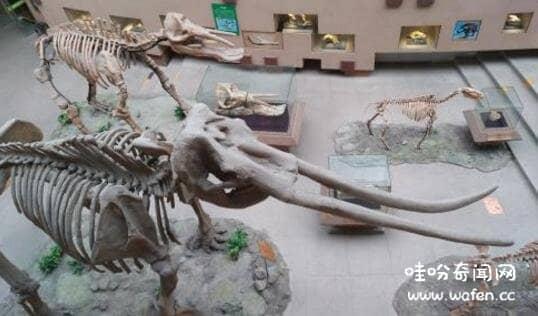 世界上牙齿最长的动物是什么