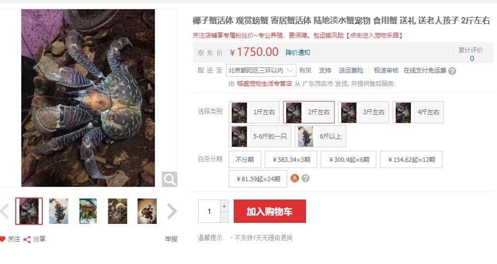 椰子蟹,椰子蟹vs帝王蟹,椰子蟹图片