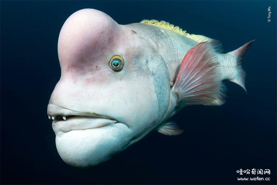 鱼类,奇闻,奇闻异事,吓人的鱼类