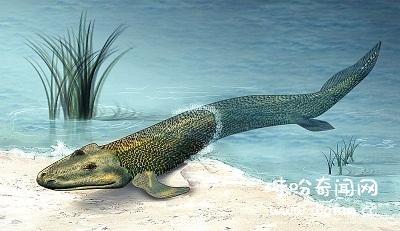 古代鲸鱼,考古