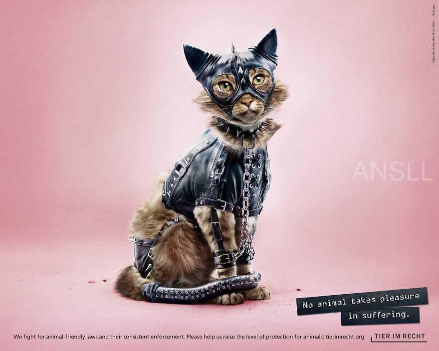 瑞士基金会做了几张动物穿SM装的照片,希望提高人们对动物虐待行为的意识