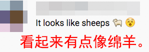 双胞胎白狮幼崽在中国诞生 网友们都被萌化了