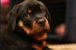 世界上最贵的狗,贵到普通人无法想象!